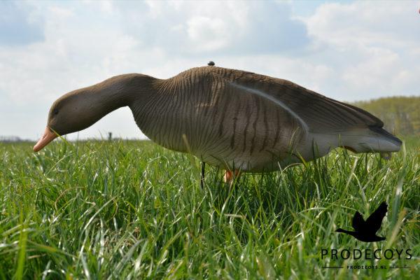 greylag goose decoy
