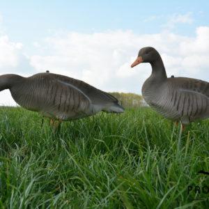 flocked greylag goose decoy