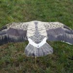 sillosocks flapper greylag