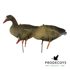 White-fronted goose decoy full body
