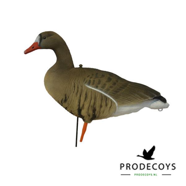 White-fronted goose decoy full body
