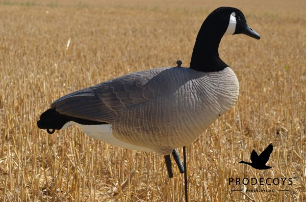 Canada goose decoy full body flocked