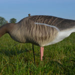 bean goose pink footed goose decoys