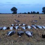 Prodecoys grauwe ganzenjacht
